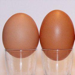 Frische Eier direkt vom Erzeuger bei Legau